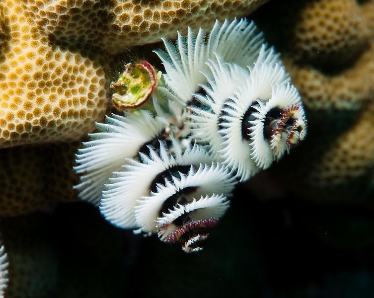 Fiji Underwater-78