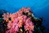 Fiji Underwater-42