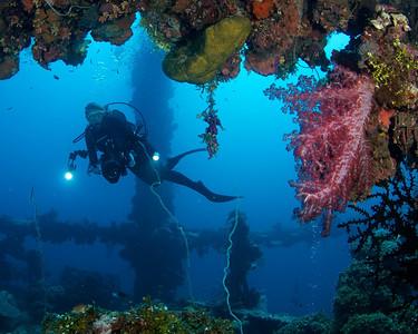 Andrea and soft coral, Fujikawa Maru.