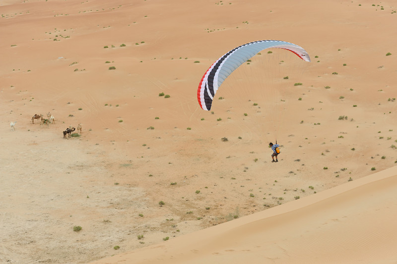 Camels and Paragliders. Strange combination