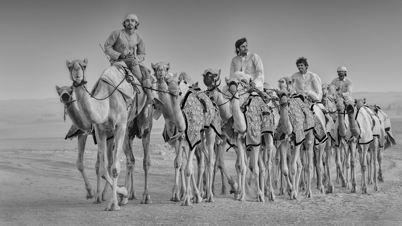 2012 Pic(k) of the week 17: Camel caravan
