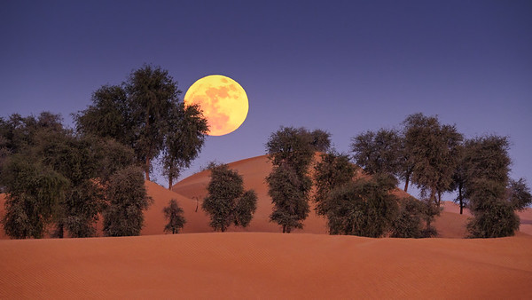 Moonrise over Ghaf trees