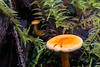 Fungi, Hoh Rain Forest (macro)