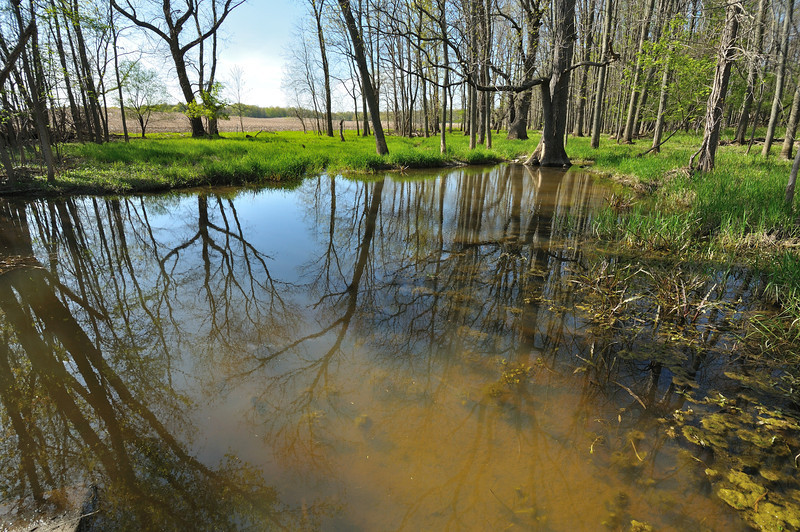 Flooded woodland along Fowlerville Road near Avon.  Nikon D5000 (May 2011).
