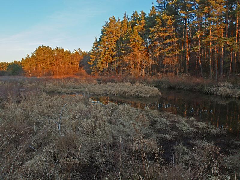 Keeney Swamp at dusk.  Olympus E-5 (November 2012).