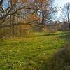 In the pasture.  Nikon D5100 (November 2011).