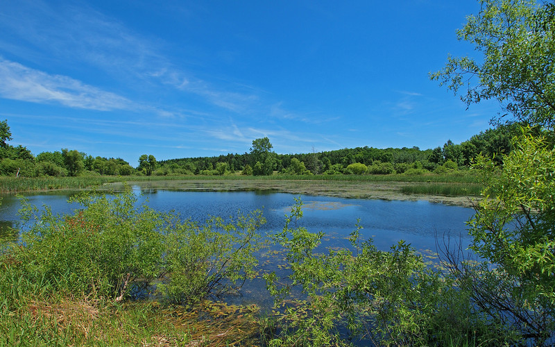 One of the ponds at Carlton Hill.  Plenty of UV light today.  Olympus E-5 (June 2012).