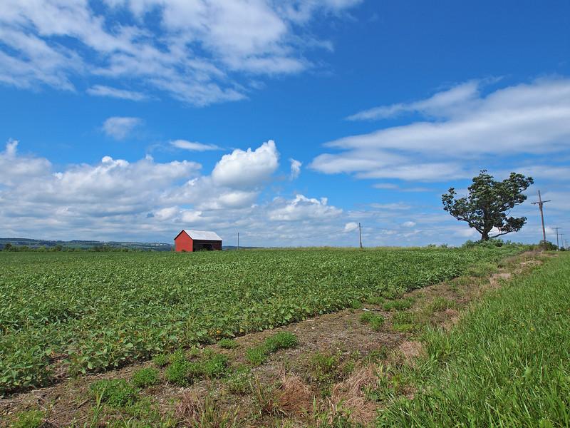 Oak Hill near Nunda. Olympus E-5 (August 2012).
