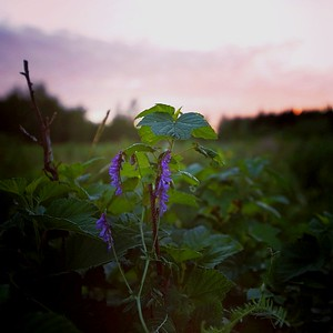 Midnight light