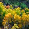 Nature's Colours II