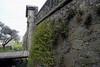 Ferns along the stone wall of the Bastión de San Miguel - along the drawbridge at the City Gate - Portón de Campo - Colonia del Sacramento town.