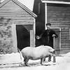 John Filer & Mary Gardiner (pig)