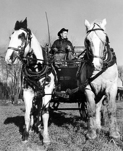 Harry behind the reins of this horse drawn buggy
