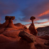 """Toadstools Evening Glow"""