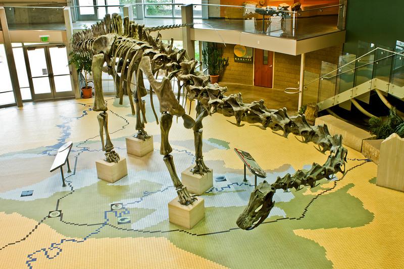 Diplodocus Maximus