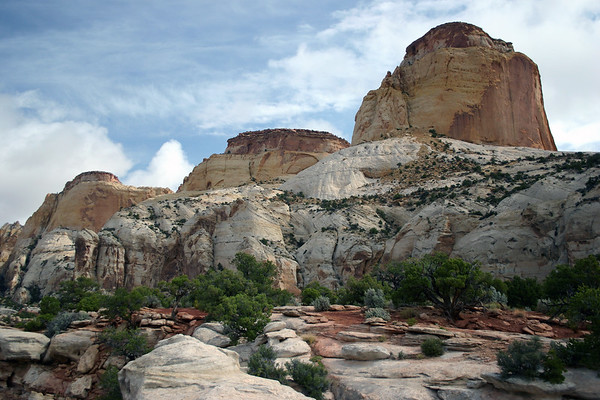 Golden Throne - layer of Carmel Formation (orange-red sandstone and siltstone, calcareous mudstone, pink gypsiferous siltstone) atop the Navajo sandstone (white, yellow and light reddish-brown sandstone) - with Utah Junipers abound - Capitol Reef National Park