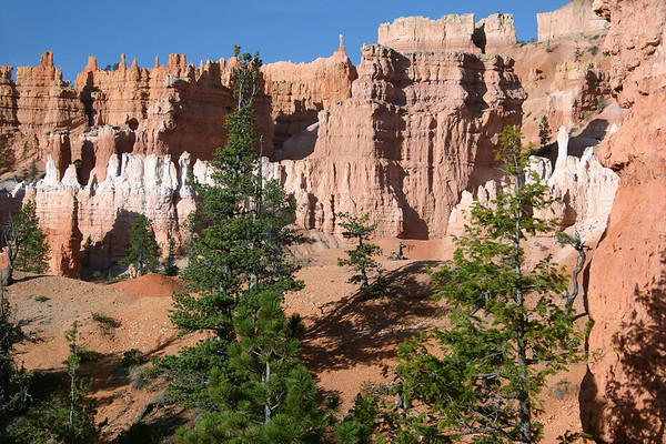 Through he coniferous tree tops - to the early morning sunlight upon the fins and hoodoos, from along the Queen's Garden Trail - Bryce Canyon National Park