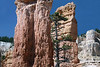 Ponderosa Pine - among the sedimentary limestone hoodoos - Bryce Canyon National Park