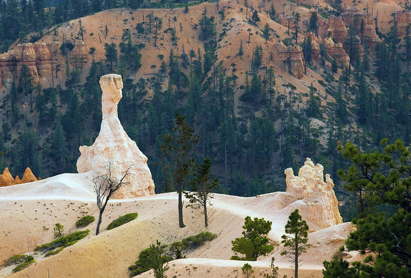 Hoodoo along the Queens Garden Trail - Bryce Canyon National Park