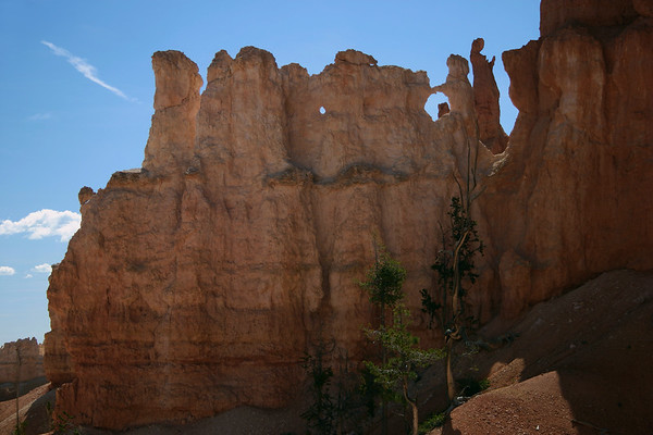 Beyond the Pinyon Pine - to the hoodoos in the Amphitheater - Bryce Canyon National Park