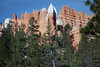 Wall Street - from the Queen's Garden Trail - Bryce Canyon National Park