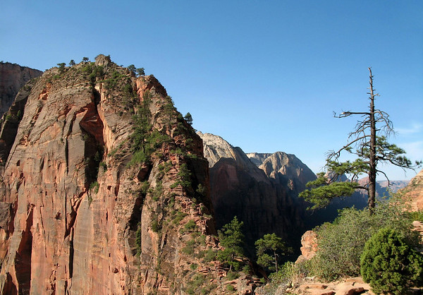 Morning sunlight upon the sheer northeastern sandstone cliff and summit of Angels Landing - from along the trail at Scout Lookout - Zion National Park