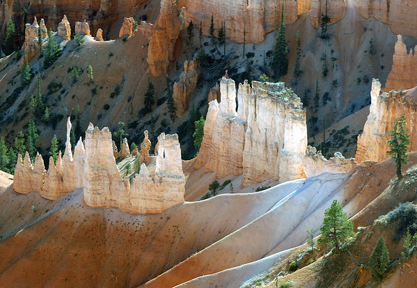 Fins and Hoodoos - among the coniferous trees - Bryce Canyon National Park