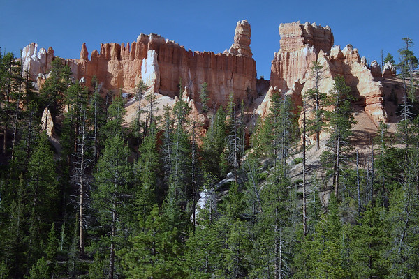 Beyond the Ponderosa Pine, Douglas Fir, and Blue Spruce - to the fins and hoodoos along the Queen's Garden Trail - Bryce Canyon National Park