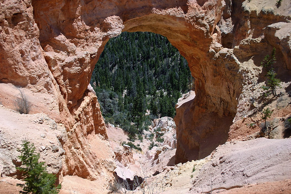 Through the Natural Bridge (arch) - down to Bridge Canyon Creek, among the coniferous Ponderosa Pine forest  - Bryce Canyon National Park