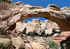 Hickman Natural Bridge - measuring 125 ft. (38 m) tall and a span length of 133 ft. (40 m) - Capitol Reef National Park