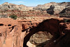 Across the Cassidy Arch- to the ridge top of the Waterpocket Fold - Capitol Reef National Park