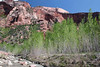 La Verkin Creek - and the springtime leafing of the riparian trees, Water Birch (Betula occidentalis) and Fremont Cottonwood (Populus fremontii) - to the northern slopes of Burnt Mountain - Zion National Park