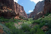 Up the La Verkin Creek Trail and canyon (towards the Kolob Arch) - between Gregory Butte (L) and Burnt Mountain (R) - Zion National Park (Kolobs Canyon District).