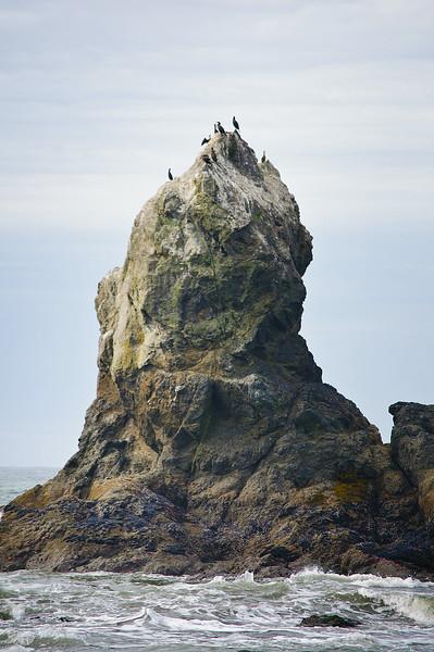 spire-cormorants