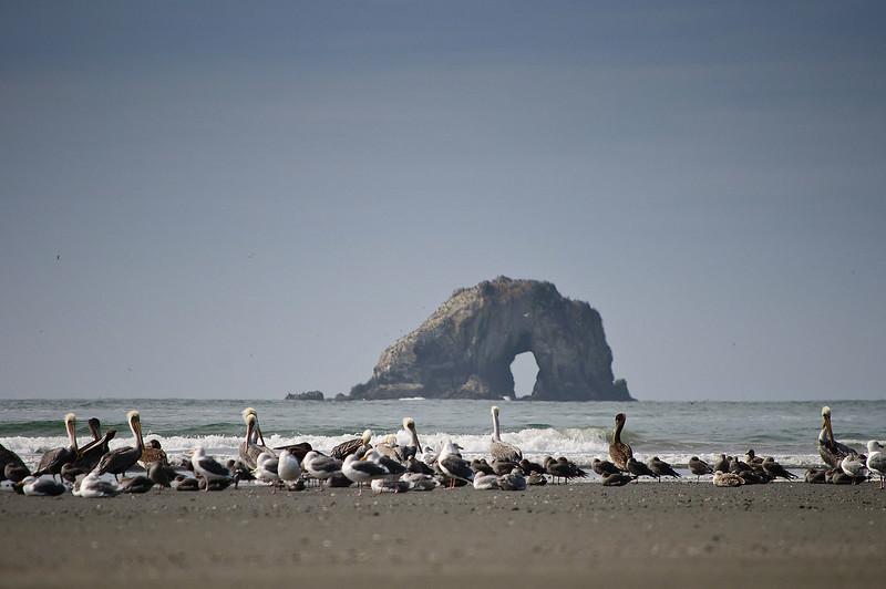 pelicans-stack