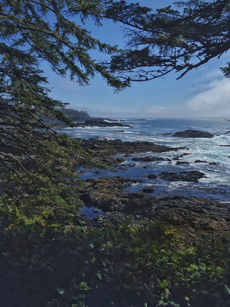 Along the Wild Pacific Trail