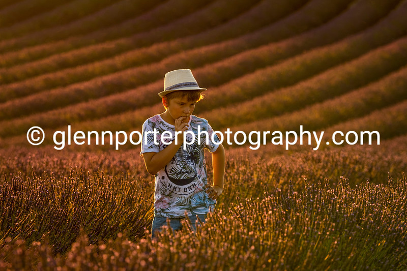 Young boy contemplating in the Golden Hour at the lavender fields of Valensole.