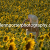 A lady in the sunflower fields of Valensole, Provence, France.