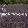 A Lady in the lavender fields of Valensole, Provence, France.