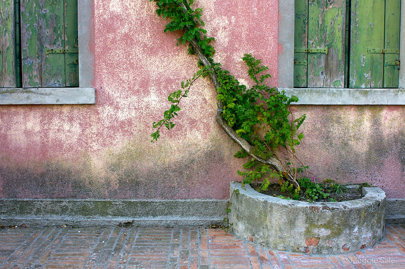 Torcello Wall