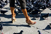 Italian Footwear and Pigeons