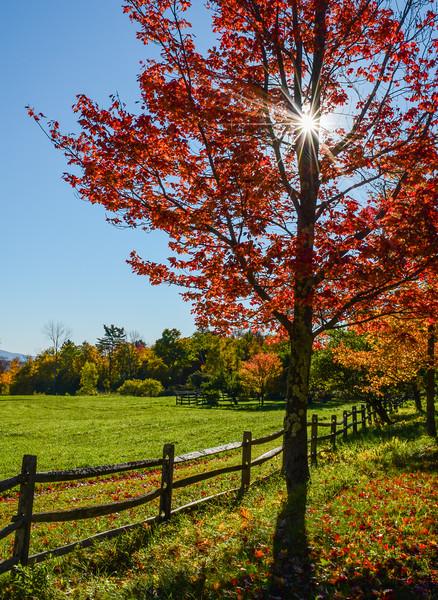 Sunburst in Fall