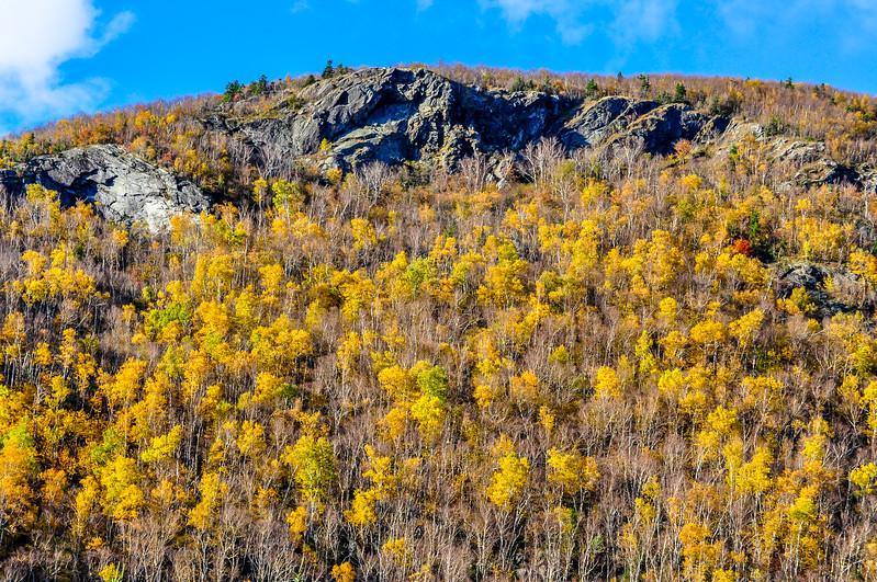 Bursts of Yellow