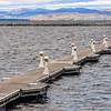 Long Dock