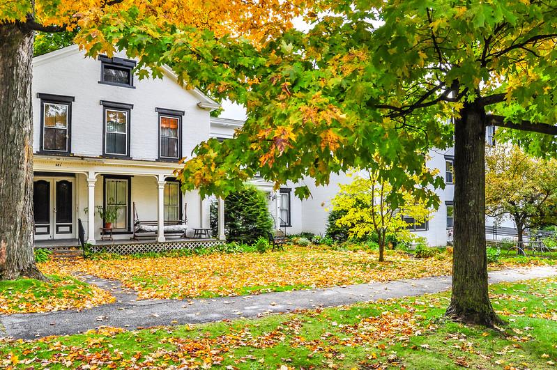 Fallen Leaves in Brandon