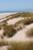 Sandy Beaches 023   Wall Art Resource