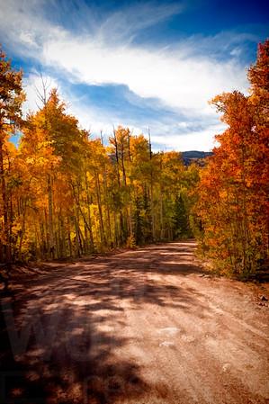Colorado Fall Foliage 038 | Wall Art Resource