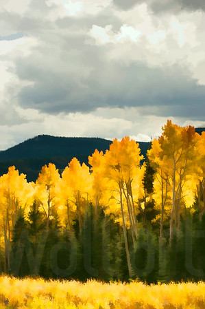 Colorado Fall Foliage 014 | Wall Art Resource
