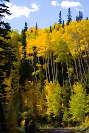 Colorado Fall Foliage 028 | Wall Art Resource