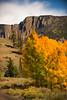 Colorado Fall Foliage 009 | Wall Art Resource